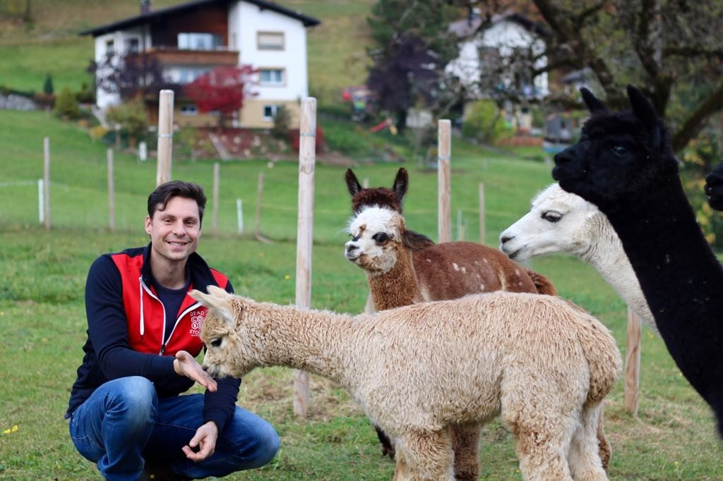 Alpaka Wandern in Vorarlberg