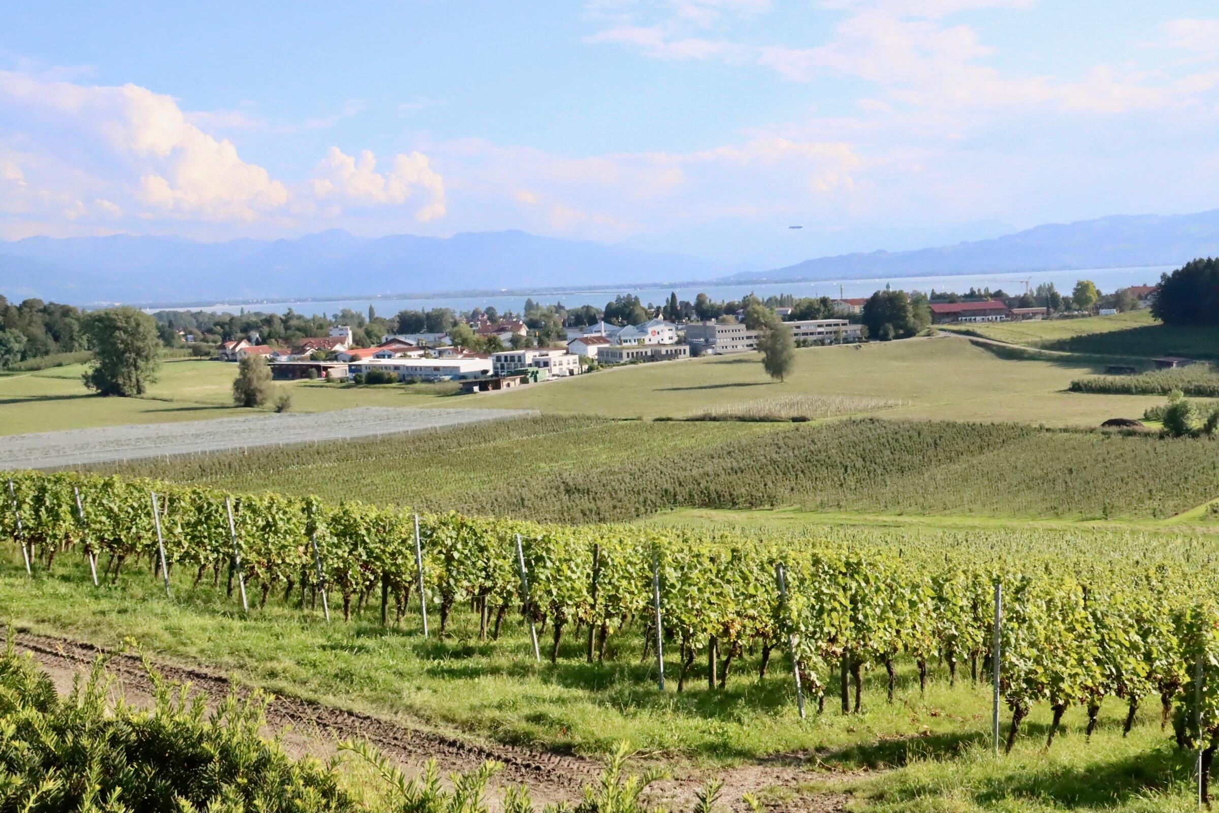 Weingut Schmidt am Bodensee